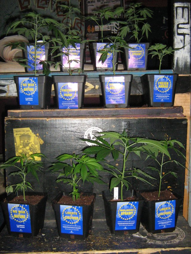 plantasweb.jpg