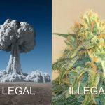 legalillegal.jpg