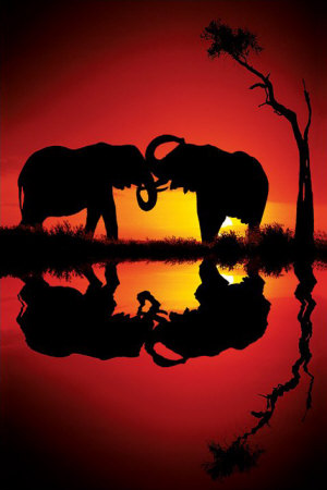 african-dreams.jpg