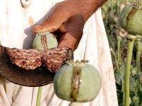 afghan-opium.jpg