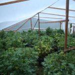 greenhousegrow.jpg