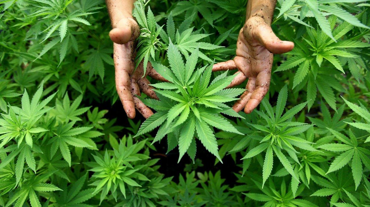 pflanzen-entdeckt-cannabis-club-gruender-in-haft.jpg